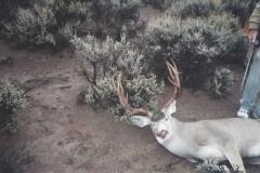deer_12