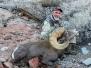Desert Bighorn Hunts