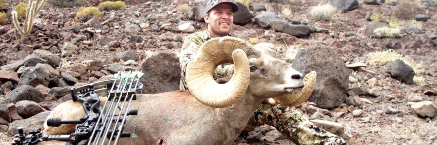Guided Bighorn Sheep Hunts
